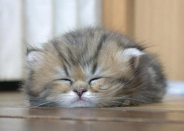 Hermosas fotos de gatos