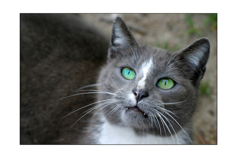 http://fishki.net/pics9/great_cats_07.jpg