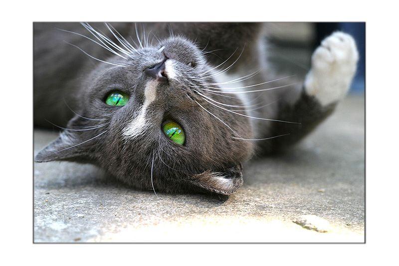http://fishki.net/pics9/great_cats_11.jpg