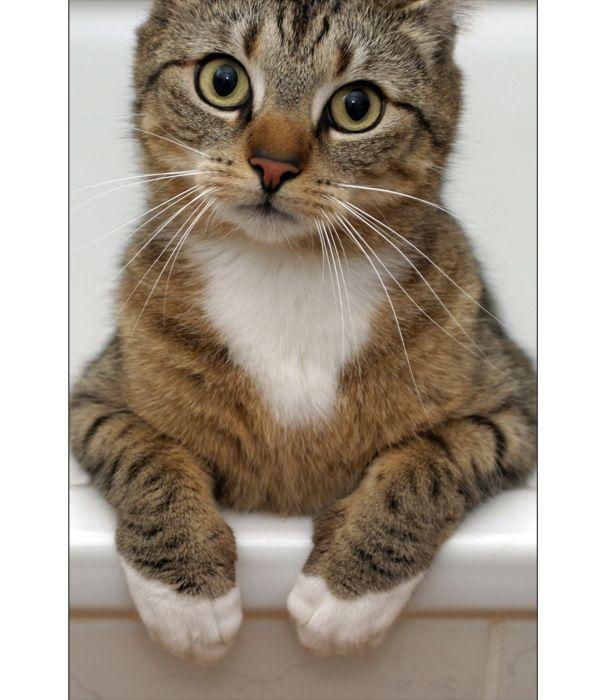 http://fishki.net/pics9/great_cats_23.jpg