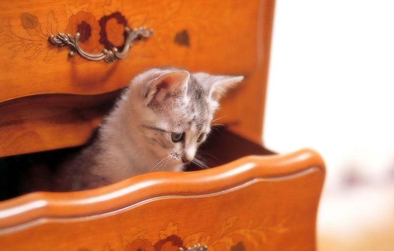 Мозг новорожденного котенка функционирует уже при рождении и быстро развивается в первые пять месяцев жизни.