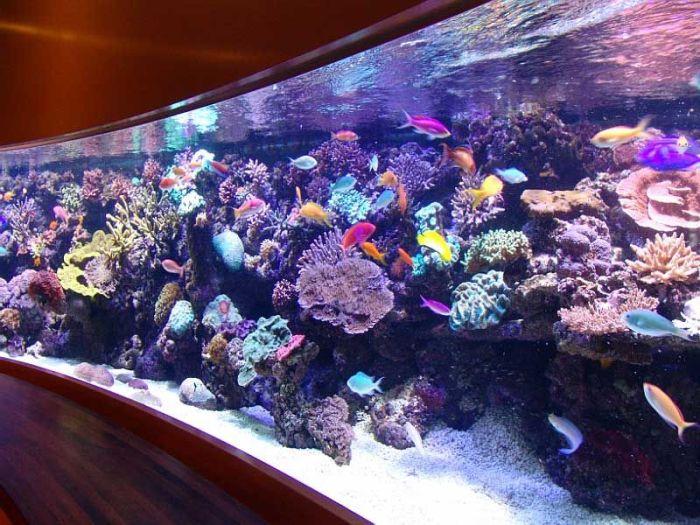 Самый красивый аквариум.