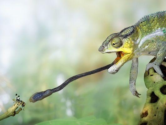 Imagenes de animales en 3D