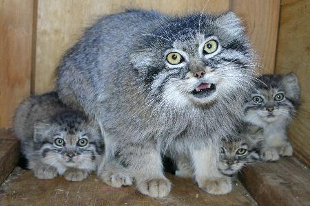 фото котят злые