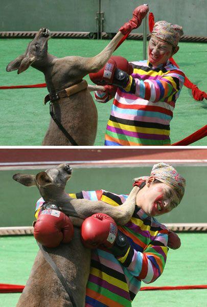 animal olympics 01 - Hayvanlara �yi Davranal�m