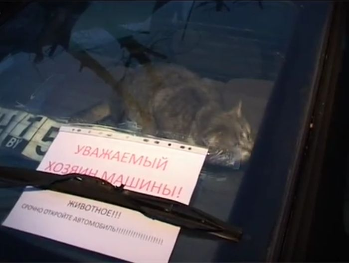 спасение кота, кот в машине, заложник