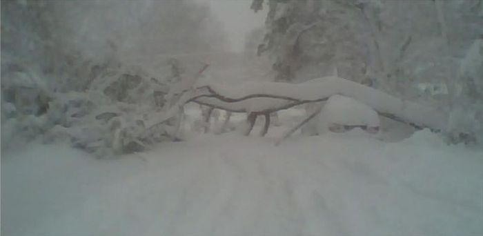 Дерево упало на машину с девушкой (5 фото)