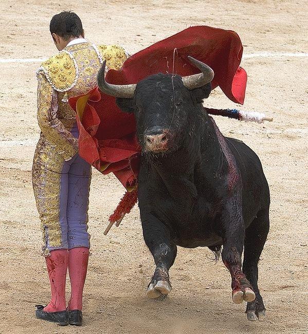 https://fishki.net/picsw/012007/16/corrida/03_corrida_136815.jpg