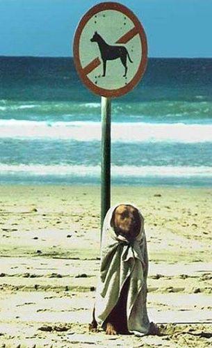 Жизнь собачья. (17 фото)