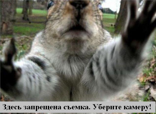 В мире животных (29 фото)