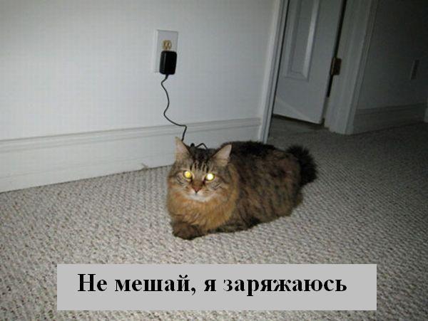 [Изображение: 002_animals.jpg]