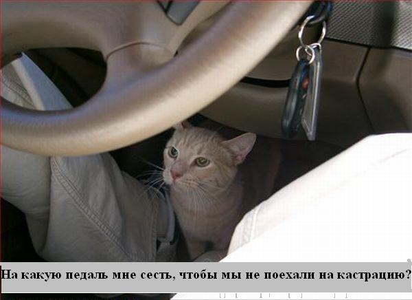 [Изображение: 004_animals.jpg]