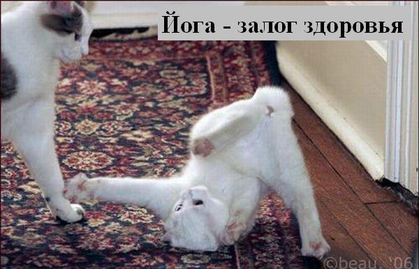 [Изображение: 010_animals.jpg]