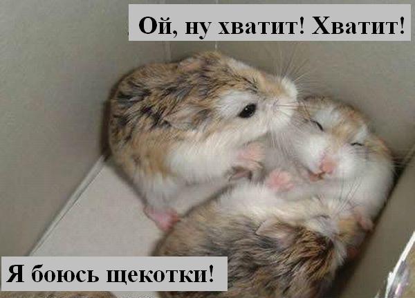 [Изображение: 024_animals.jpg]