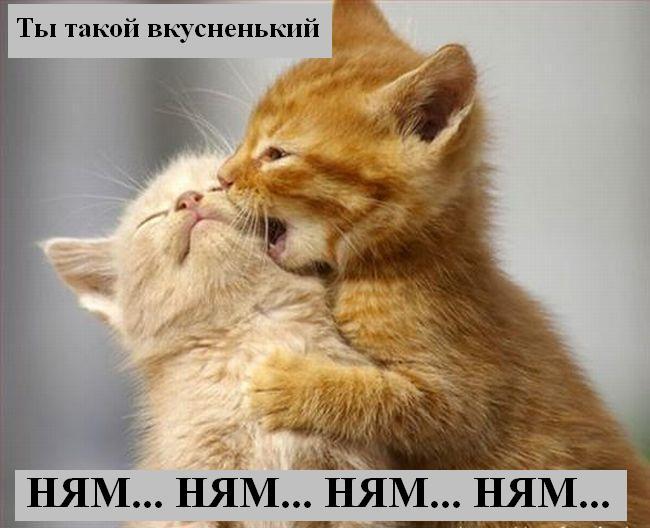 [Изображение: 034_animals.jpg]
