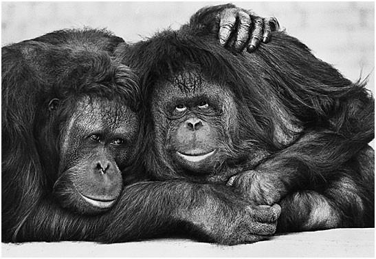 Черно-белый позитив от Arthur Steel (27 фото)