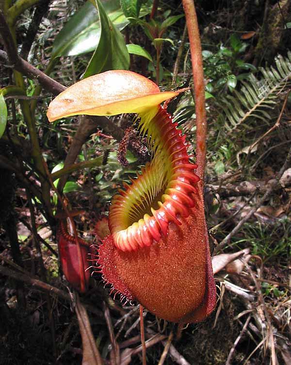 Эротические рассказы про растений фото 229-899