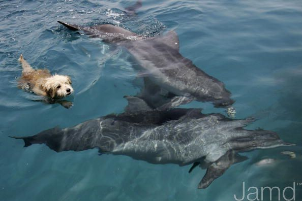 Собака-дельфин (11 фото)