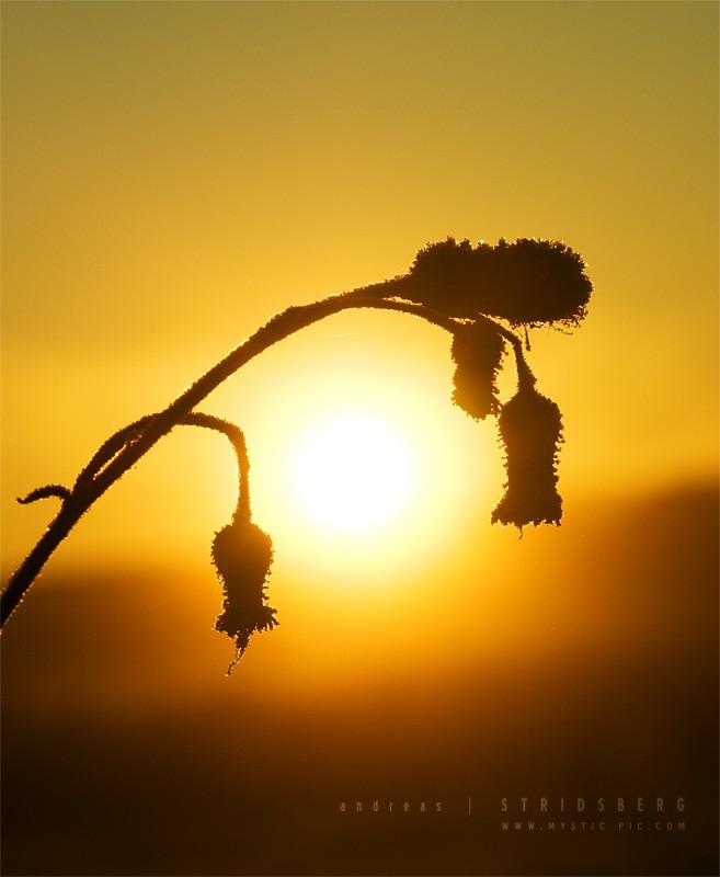 О природе в фотографиях (82 фото)