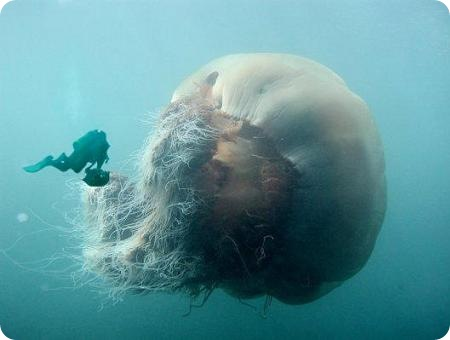 diver-and-jellyfish.jpg