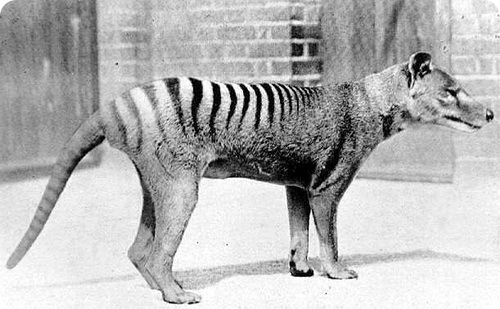 Странные и редкие животные (61 фото)