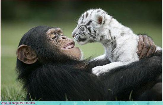 Забавные животные (97 фото)