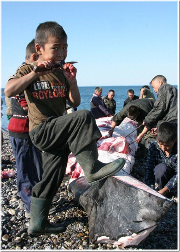 Сейчас речь пойдет о зверобойном промысле и рыбалке, собачьих упряжках, чукотских охотниках и многом другом.