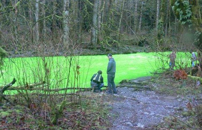 Зеленая река канадского парка (11 фото)