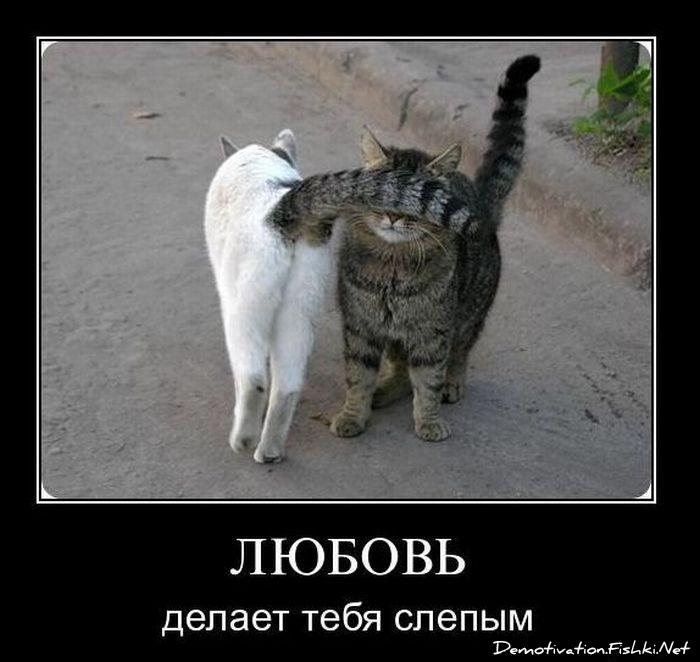 демотиваторы на тему кошек