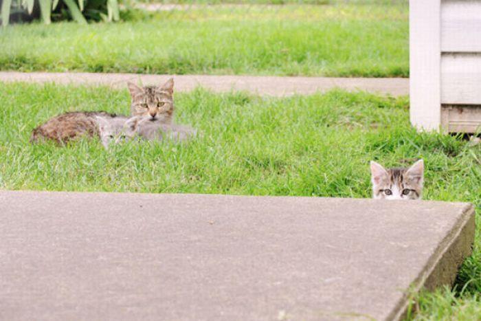 Они следят за нами (40 фото)