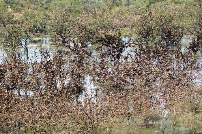 Угадайте, что с теми деревьями вдалеке? (9 фото)
