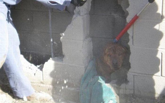 Собака застряла в проеме (3 фото)
