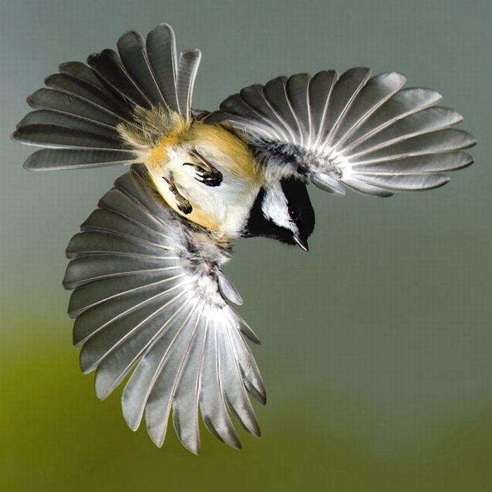 Птицы в полете своими руками