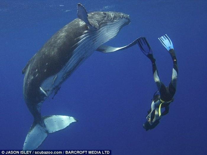 Поздоровался с китом (4 фото)