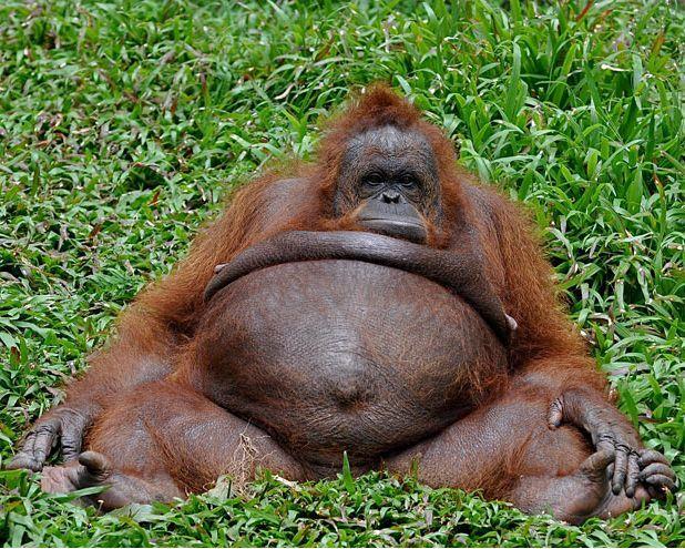 Самые странные и необычные фотографии животных 2011 (26 фото)
