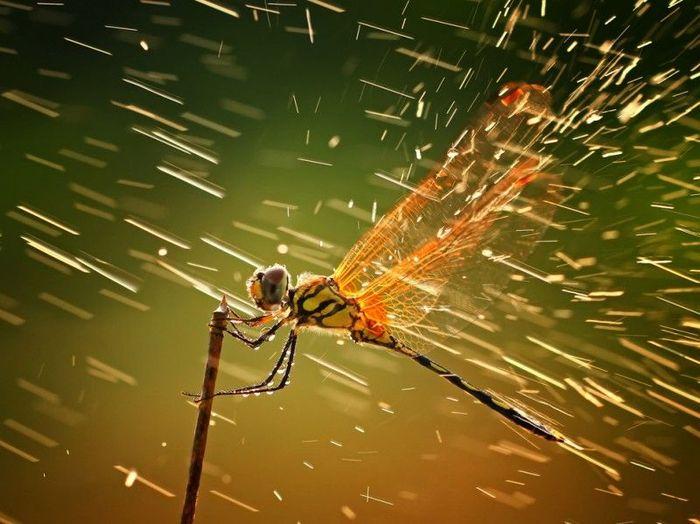 Победители фотоконкурса National Geographic 2011 (15 фото)