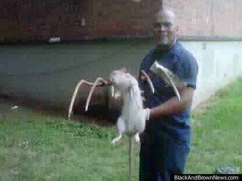 Гигантские крысы в Нью-Йорке (2 фото)