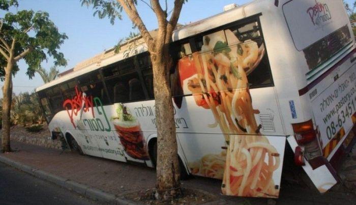 Израильский автобус затесался между деревьев (5 фото)