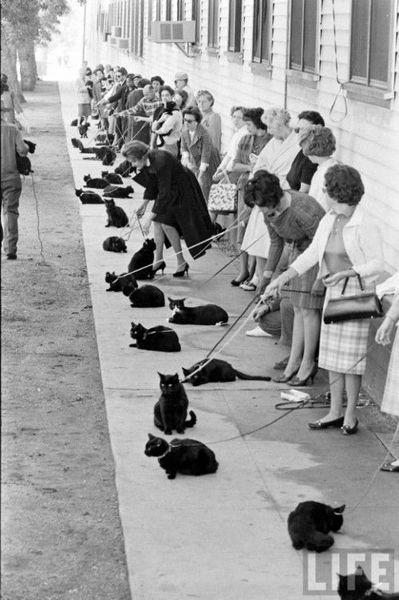Кастинг черных котов (11 фото)