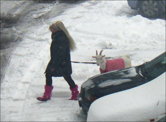 Блондинка выгуливает своего питомца (4 фото)