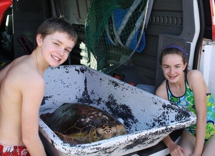 Морская черепаха съела рыбу фугу (5 фото)