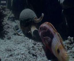 Жестокий подводный мир
