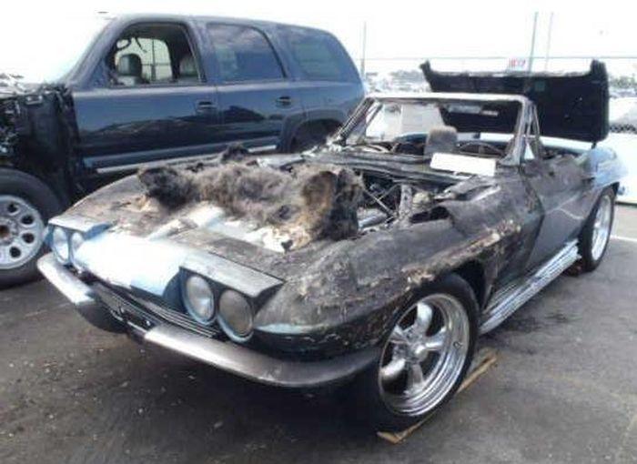 Угольки от Chevrolet Corvette 1964 г.в. ннннада? (15 фото)
