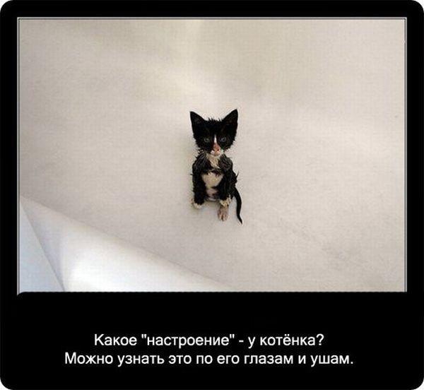 Про кошек (90 фото)