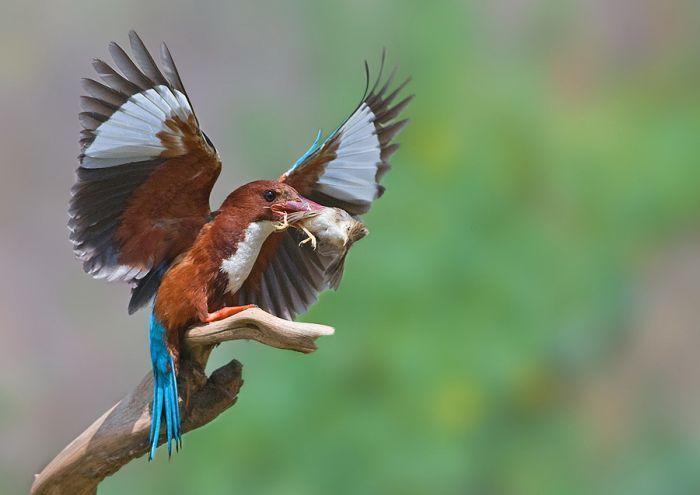 Потрясающие фотографии птиц (47 фото)
