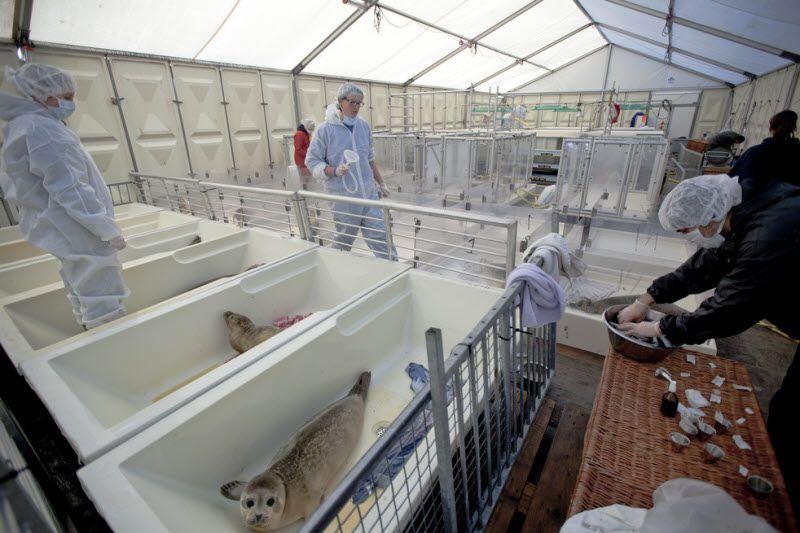 Детский дом для тюленей-сирот в Голландии (12 фото)