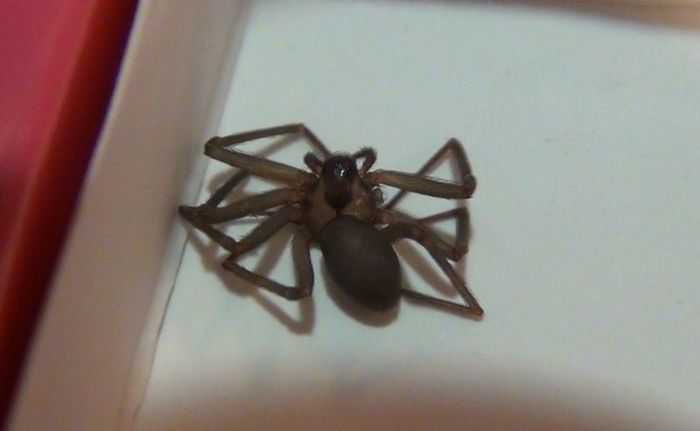 Девушку укусил паук (19 фото)