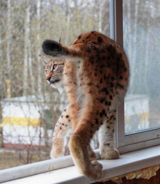 Домашний зоопарк фотографа (83 фото)