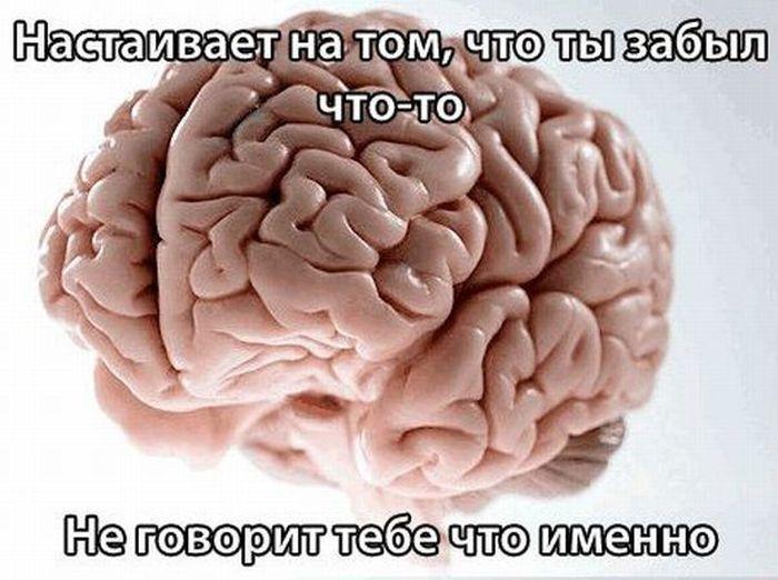 Мозговые мемы (16 фото)