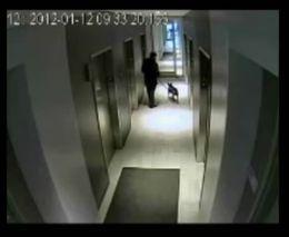 Подборка роликов от 24.01.2012